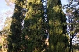 12_2_Cypres de Provence_w